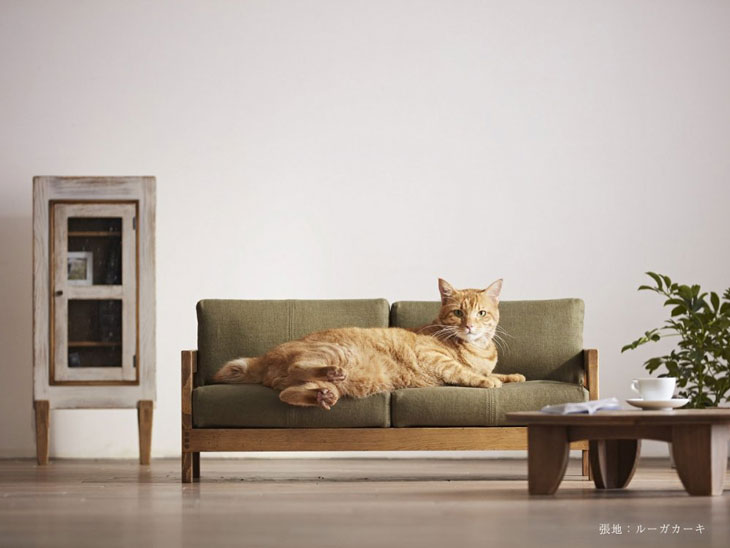 カツデンアーキテック-猫-ブログ-3